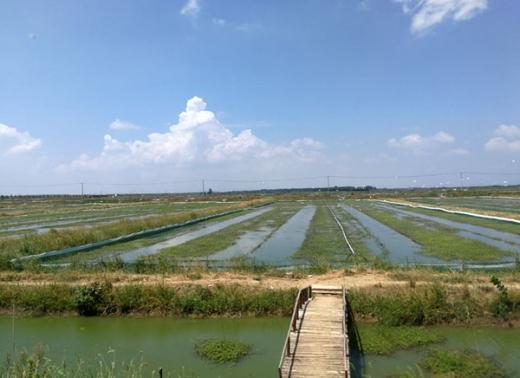 南河古渡养殖基地