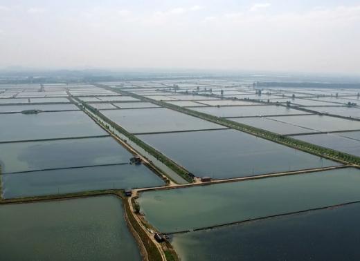 小龙虾生态养殖基地
