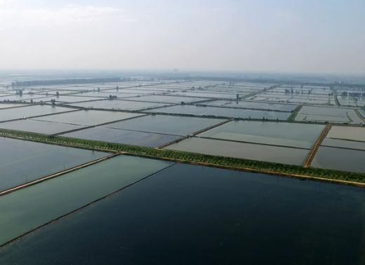 生态养殖基地风采