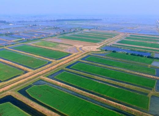 稻渔综合种养基地展示
