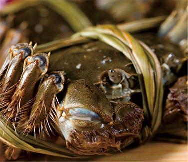 高温季节如何养殖螃蟹?