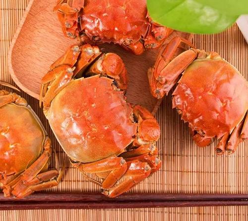 大闸蟹生长过程的几个阶段