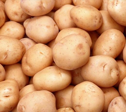汉川南河乐动体育app下载y土豆