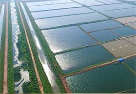 生态养殖基地