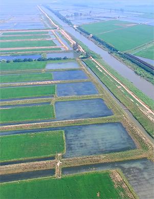 稻渔综合种养基地